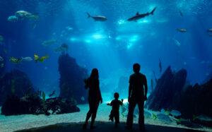 Los mejores hoteles submarinos del mundo: 7 propiedades imperdibles